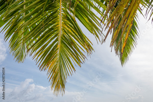 Fotografie, Obraz  Palm trees in the Maldive Islands