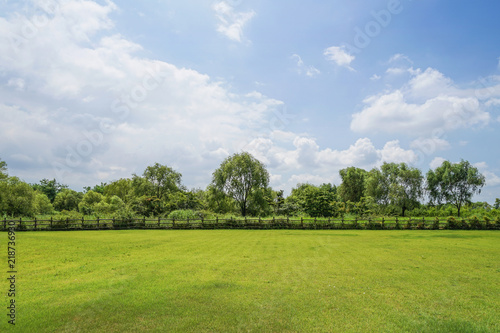 Foto op Plexiglas Landschappen Green grass background