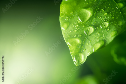 Obraz water drops on green leaf - fototapety do salonu