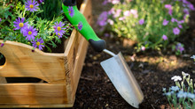 Gardening. Garden Tools And Crate Full Of Gorgeous Plants Ready For Planting. Spring Garden Works Concept. Garden Landscaping Small Business Start Up.