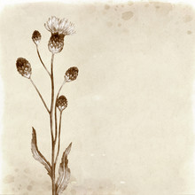 Hand Drawn Illustration Of A Thistle Flower