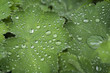 Water droplets on a green leaf background