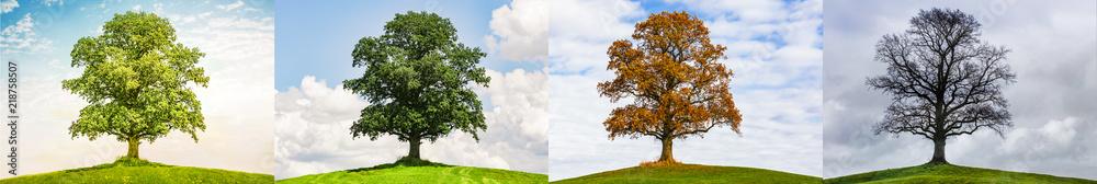 Fototapeta Baum im Wechsel der Jahreszeiten