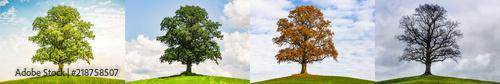 Foto  Baum im Wechsel der Jahreszeiten