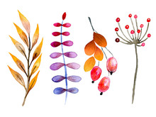 Hand Drawn Watercolor Forest Leaves And Berries. Isolated Icons. Autumn Abstract Botanical Branches. Guelder, Dog Rose. Season Greetings, Wedding Card, Sale Banner