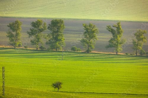 Deurstickers Khaki Moravian fields in spring