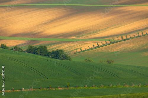 Moravian fields in spring