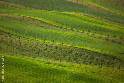 Deurstickers Groene Moravian fields in spring