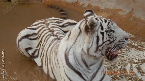 Tuinposter Eekhoorn tiger