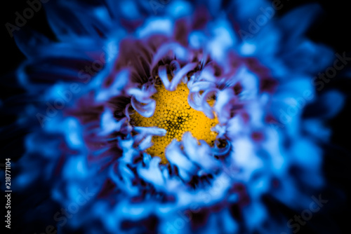 Yellow center inside abstract blue flower leafs background buy yellow center inside abstract blue flower leafs background mightylinksfo