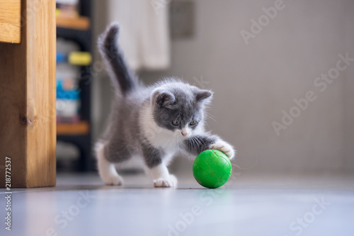 La pose en embrasure Chat The kitten is playing with a ball