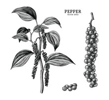 Pepper Hand Draw Vintage Clip ...