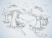 Path Among Oak Groves. Vector Drawing