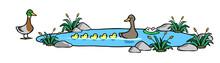 Ente Mit Fünf Küken Schwimmt...