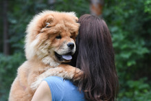 Woman Play With Chow Chow Dog ...