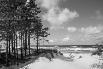 Fototapeta Morze Baltic sea shore in Latvia. Sand dunes with pine trees and clouds.