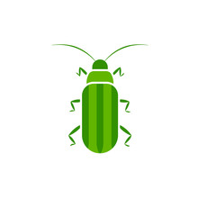 Cucumber Beetle Icon