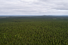 Aerial View Of Vast Boreal Forest As Far As Eye Can See