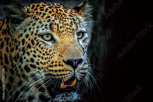 Poster Leopard Leopardo