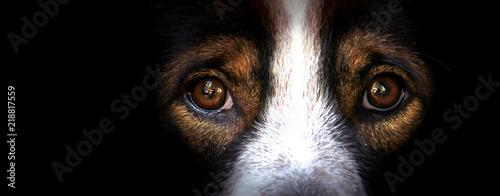 Spoed Foto op Canvas Iris The eyes of dogs, emotions and feelings.
