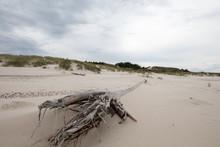 Dry Tree Fallen On The Beach W...