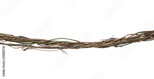 Photo Wild dry liana, jungle vine isolated on white background, clipping path