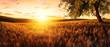 canvas print picture - Sonnenuntergang auf einem goldenen Weizenfeld