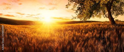 Poster Bruin Sonnenuntergang auf einem goldenen Weizenfeld