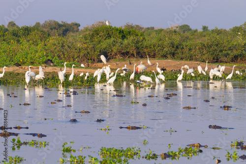 Fotografija  Beautiful Pantanal landscape, South America, Brazil