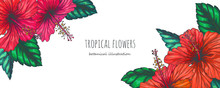 Vector Vintage Background With Red Tropical Flowers On White. Botanical Color Hand Drawn Illustration Of Hibiscus In Engraving Style For Wedding Or Greeting Card Design