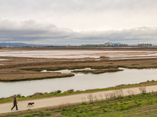 Walking The Dog On The Marshlands, San Francisco Bay