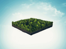 Isolated Cross Section, Soil Slice Of Rain Forest, Taiga, Deep Forest. 3d Illustration On Light Background.