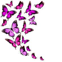 Beautiful Pink Butterflies, Is...