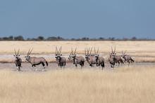 A Wonderful Beautiful Herd Of ...