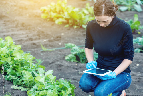 Fototapeta Woman specialist agronomist holding a tablet. Quality control of production on farms obraz