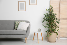 Stylish Living Room Interior With Sofa And Houseplant Near White Wall