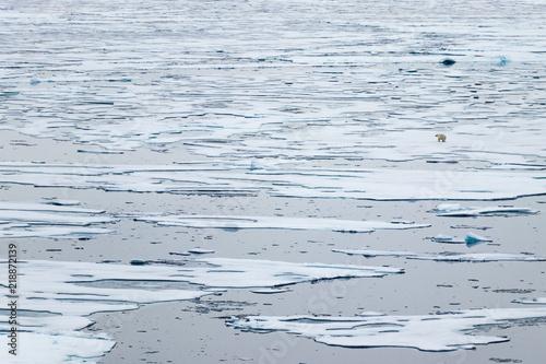 Fotografia  North Ice edge at 82 41