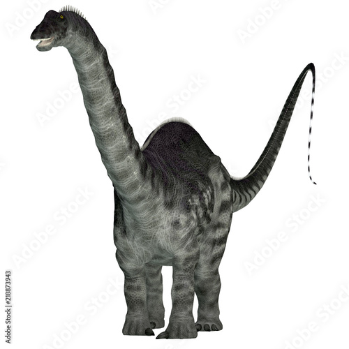 Photo  Apatosaurus Dinosaur on White - Apatosaurus was a herbivorous sauropod dinosaur that lived in North America during the Jurassic Period