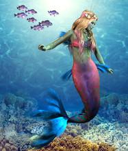 Coral Reef Mermaid - A School ...