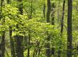 木 緑 素材