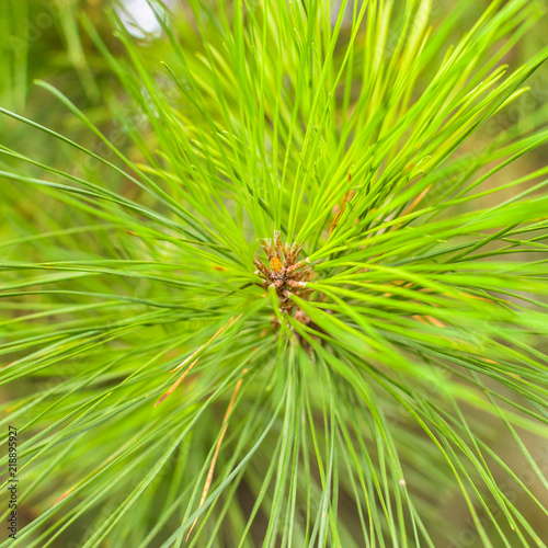 Close up of Pine Tree Branch A Shadow Depth of Field Nature Summer 2018 England