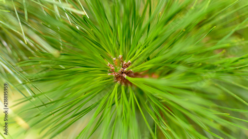 Close up of Pine Tree Branch B Shadow Depth of Field Nature Summer 2018 England