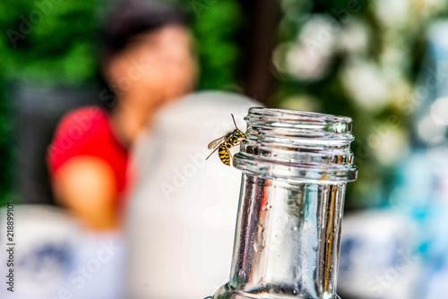 Vászonkép close up of Wasp on empty bottle