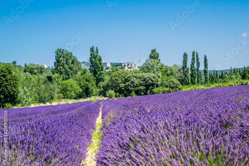 Fotobehang Lavendel Champs de lavandes.