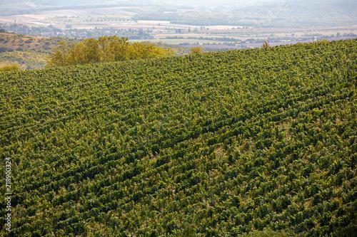 Photo  Palava Vineyards. South Moravia Czech Republic