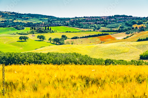 Foto op Canvas Platteland View of the beautiful field of wheat and flowers in Tuscany with the village farm house and Cypresses trees