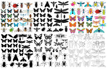 Vector, Isolated, Insect, Set,...