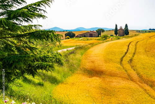 Landscape of the hilly tuscany field with the Cappella della Madonna di Vitaleta and the field of wheat in Valdorcia, Italy
