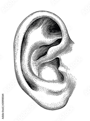 Human ear hand draw vintage clip art isolated on white background Tablou Canvas
