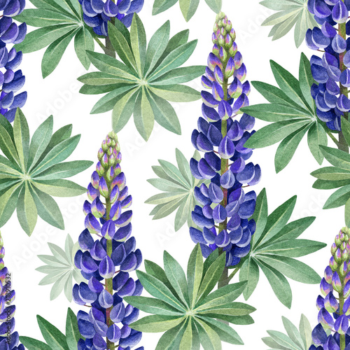 Leinwand Poster Watercolor illustrations of wild lupines. Seamless pattern